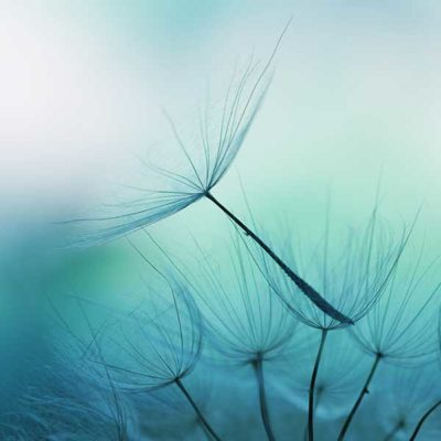 Image of dandelion on calming blue and green background